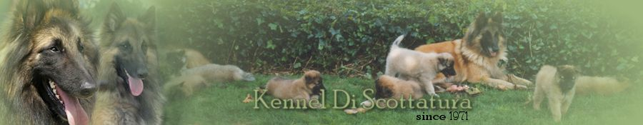Kennel Di Scottatura